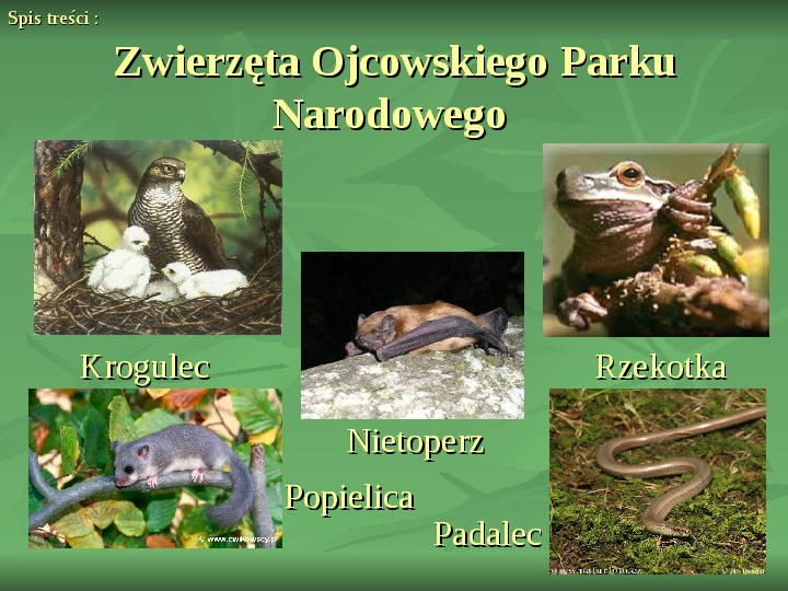 Ojcowski Park Narodowy - Slajd 9
