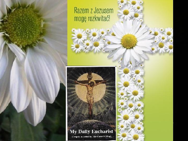 Cuda eucharystyczne - Slajd 15