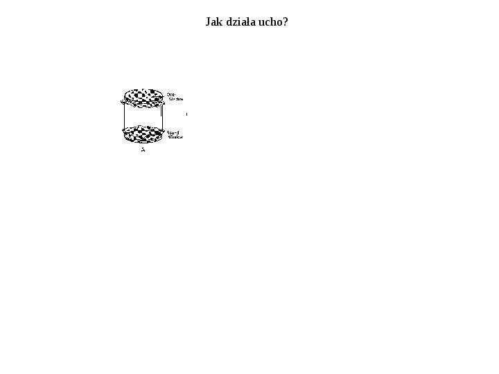 Układ przedsionkowy ucha - Slajd 21