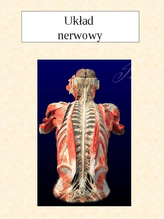 Układ nerwowy - Slajd 1