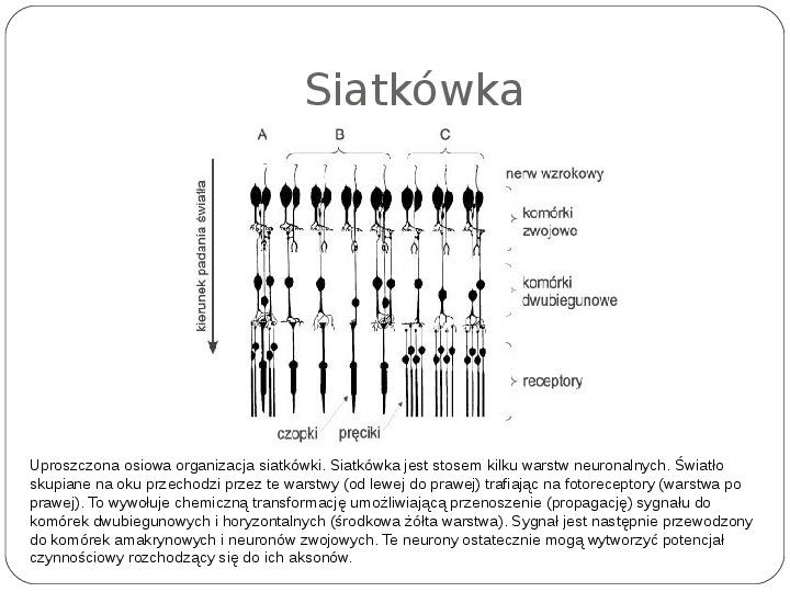 Schematy dla zmysłów - Slajd 27