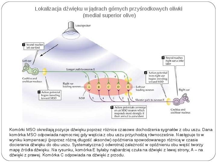 Schematy dla zmysłów - Slajd 61