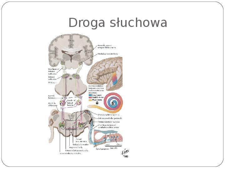 Schematy dla zmysłów - Slajd 66
