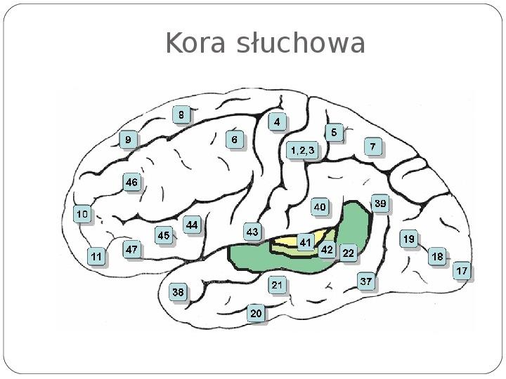 Schematy dla zmysłów - Slajd 73