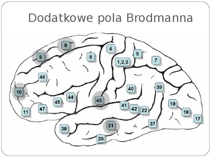 Schematy dla zmysłów - Slajd 77