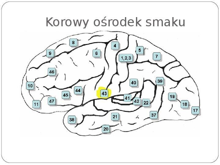 Schematy dla zmysłów - Slajd 125