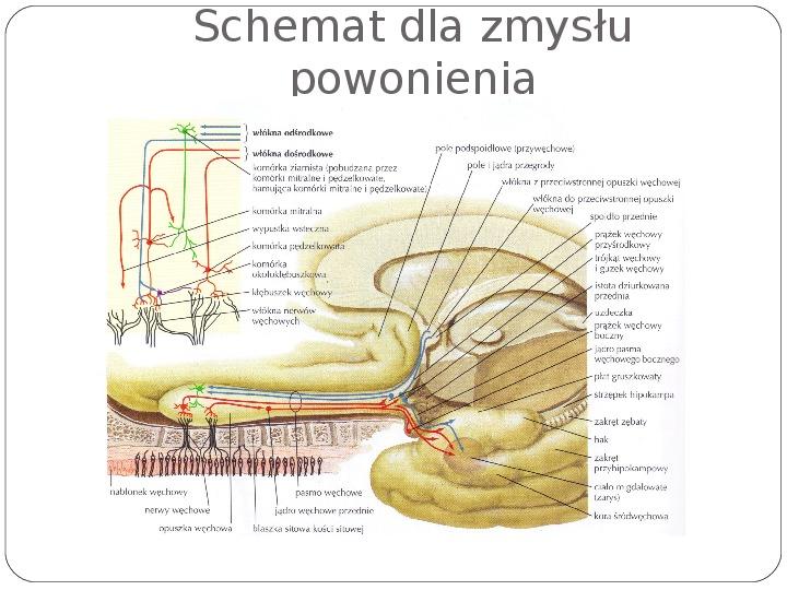 Schematy dla zmysłów - Slajd 130