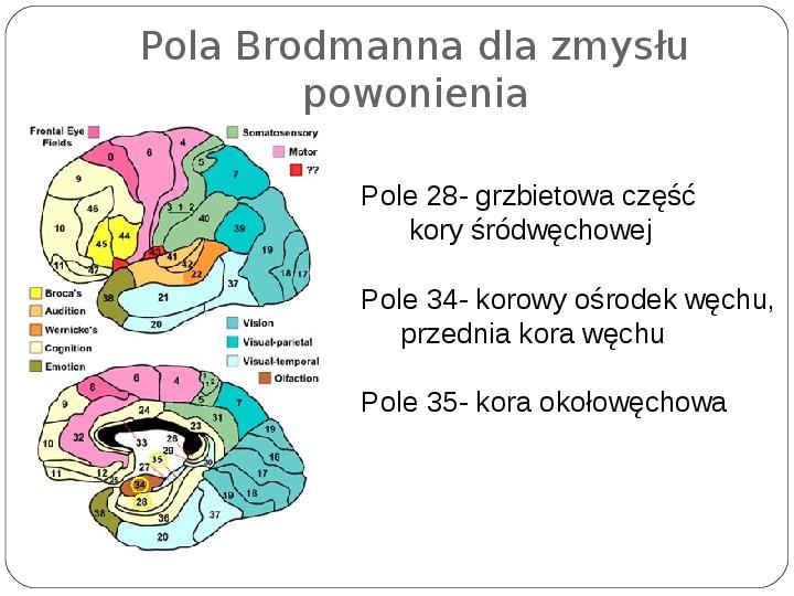 Schematy dla zmysłów - Slajd 131