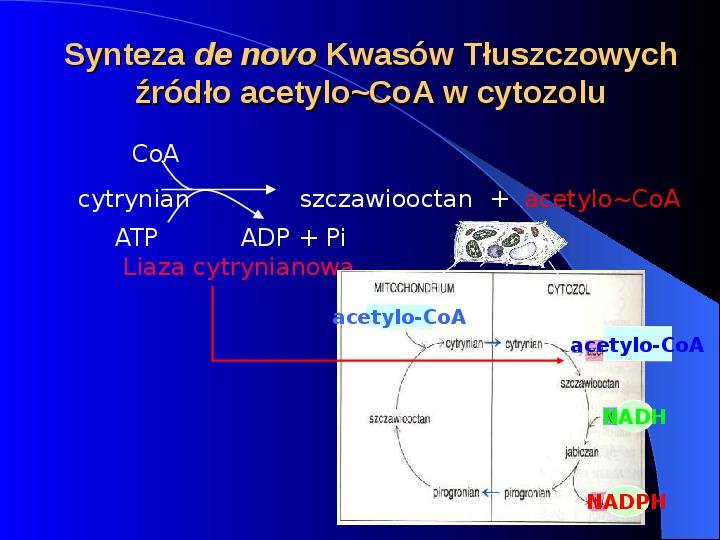 Lipidy - Slajd 6