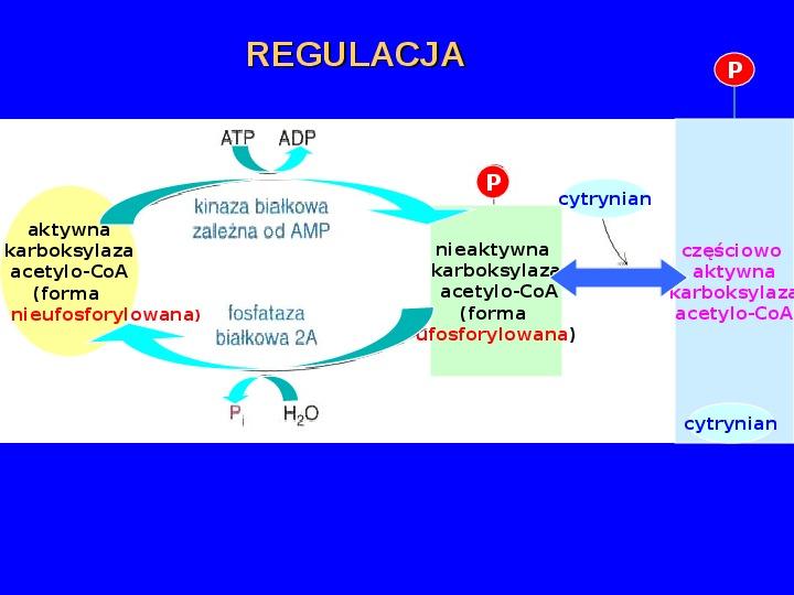 Lipidy - Slajd 12