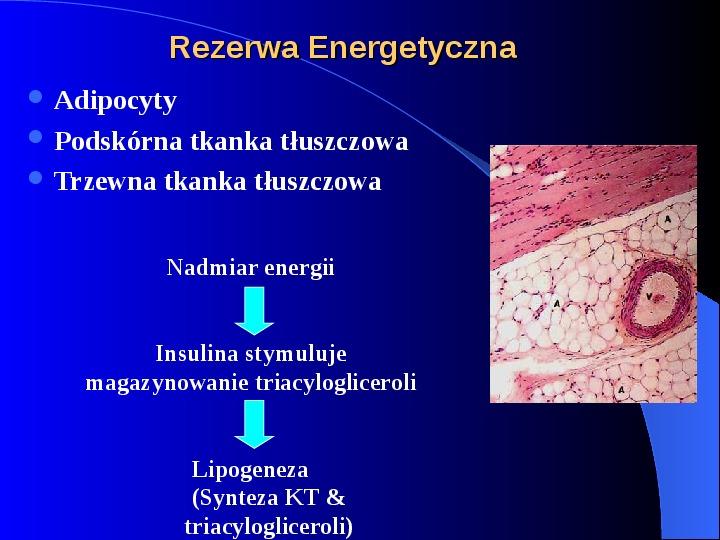 Lipidy - Slajd 19