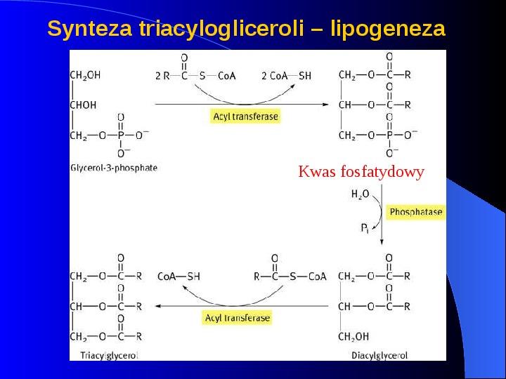 Lipidy - Slajd 21