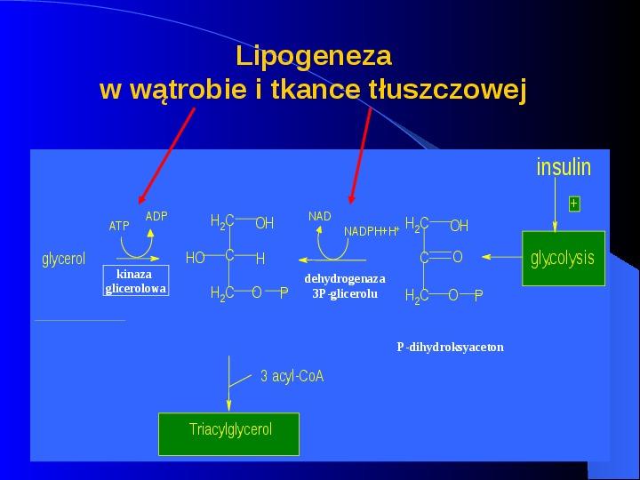 Lipidy - Slajd 22