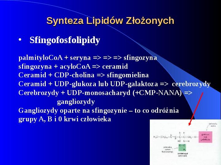 Lipidy - Slajd 26