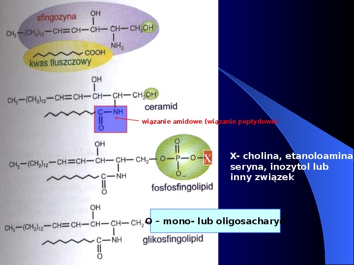 Lipidy - Slajd 27