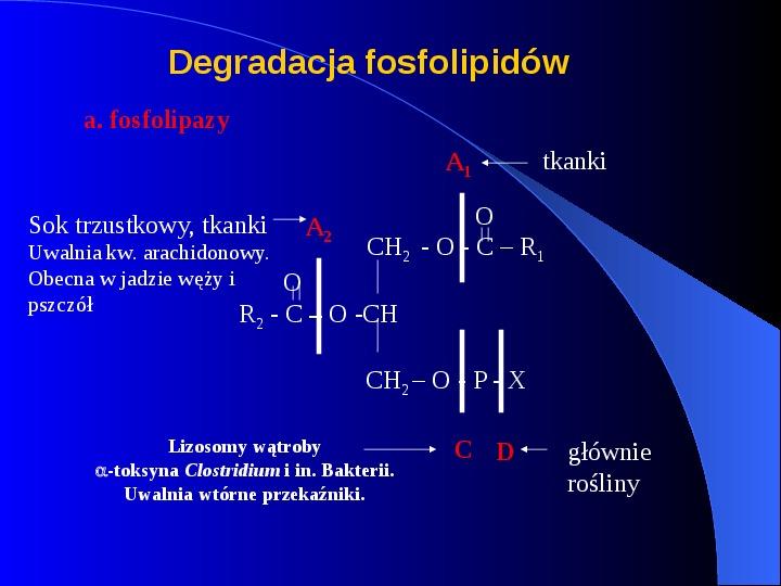 Lipidy - Slajd 43