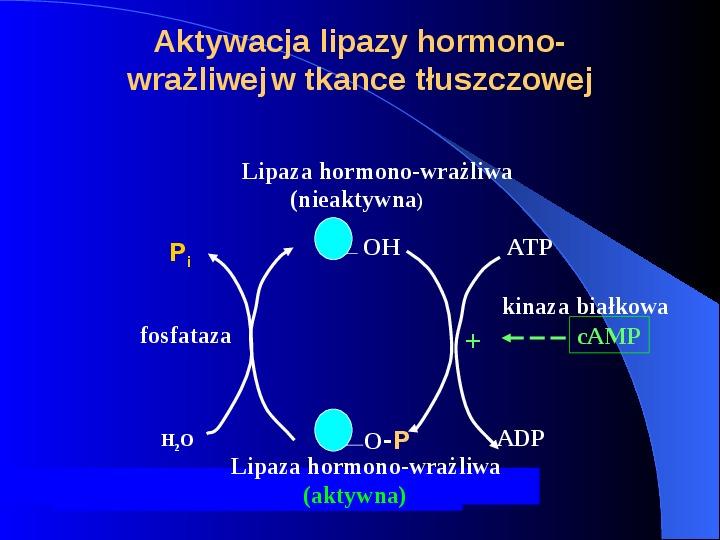 Lipidy - Slajd 48