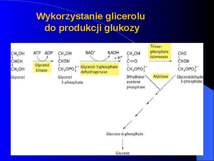 Lipidy - Slajd 50