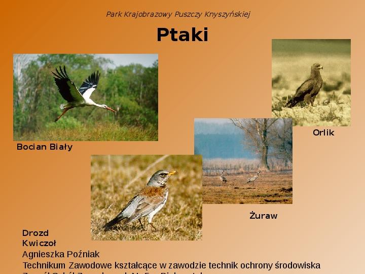 Park Krajobrazowy Puszczy Knyszyńskiej - Slajd 5