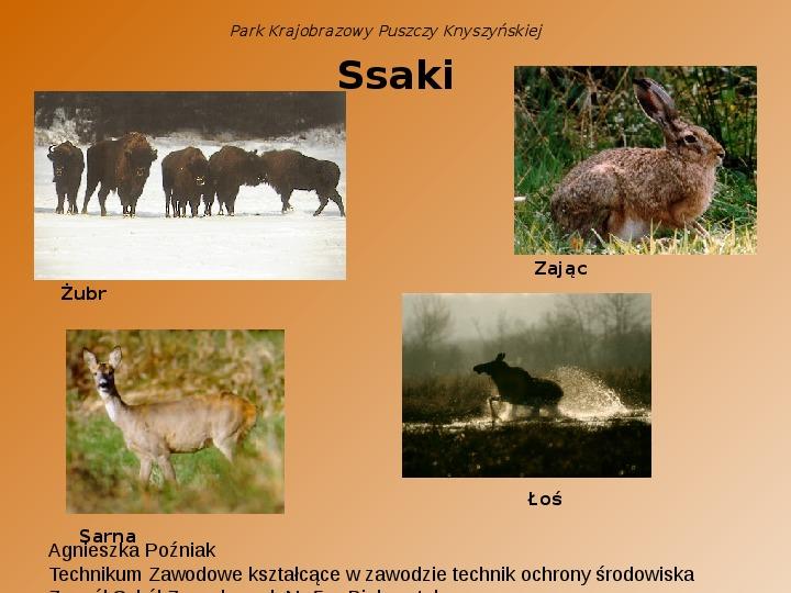 Park Krajobrazowy Puszczy Knyszyńskiej - Slajd 6