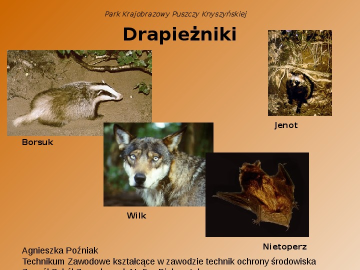 Park Krajobrazowy Puszczy Knyszyńskiej - Slajd 7
