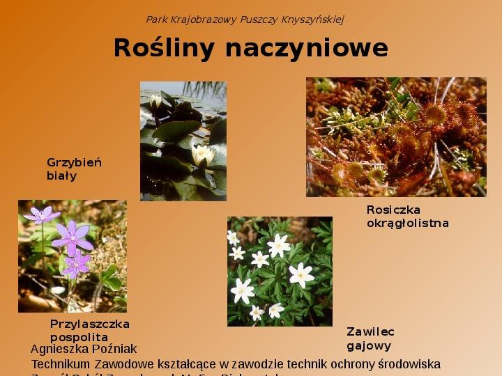 Park Krajobrazowy Puszczy Knyszyńskiej - Slajd 10