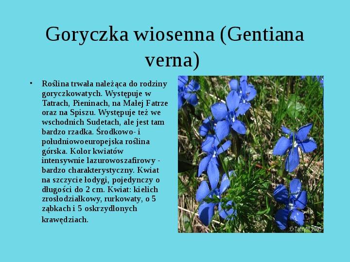 Tatrzański Park Narodowy - Slajd 7