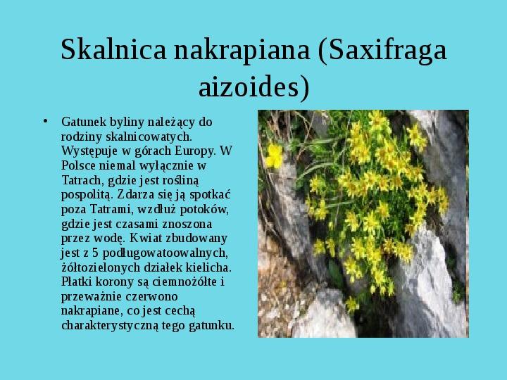 Tatrzański Park Narodowy - Slajd 13