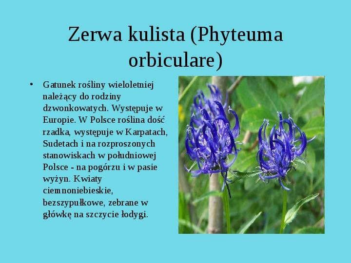 Tatrzański Park Narodowy - Slajd 15