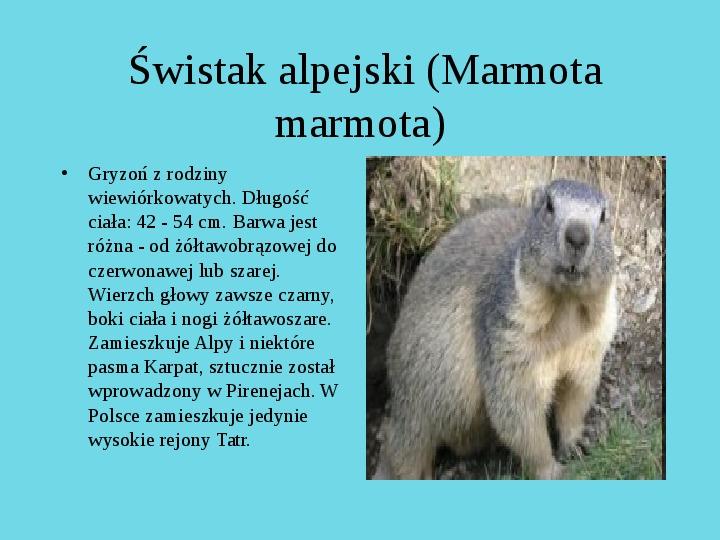 Tatrzański Park Narodowy - Slajd 18
