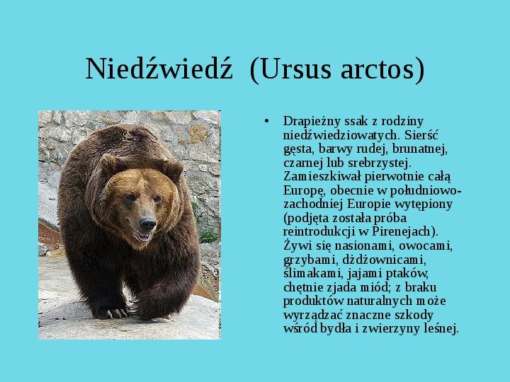 Tatrzański Park Narodowy - Slajd 21