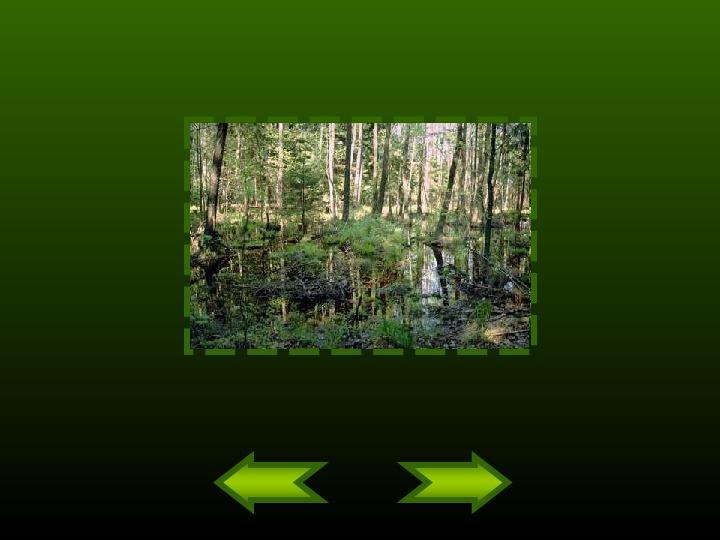 Biebrzański Park Narodowy - Slajd 8