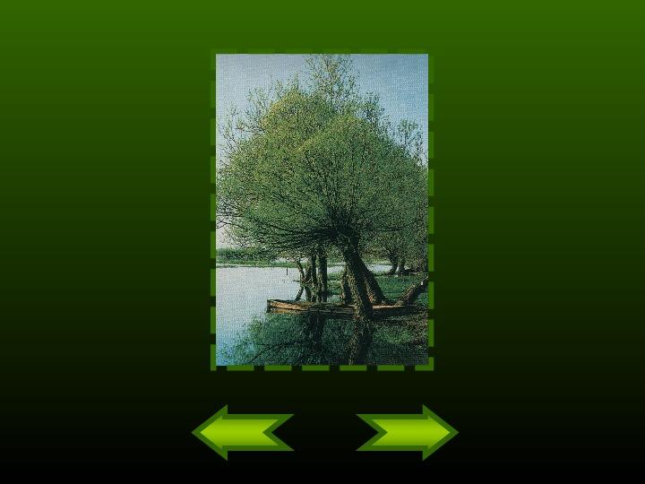 Biebrzański Park Narodowy - Slajd 13