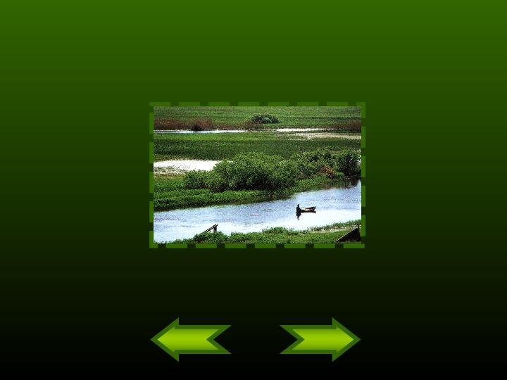 Biebrzański Park Narodowy - Slajd 15