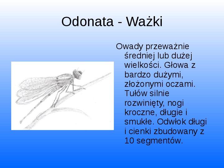 Nasze lokalne światy wodne Jeziorko Kamionkowskie - Slajd 28
