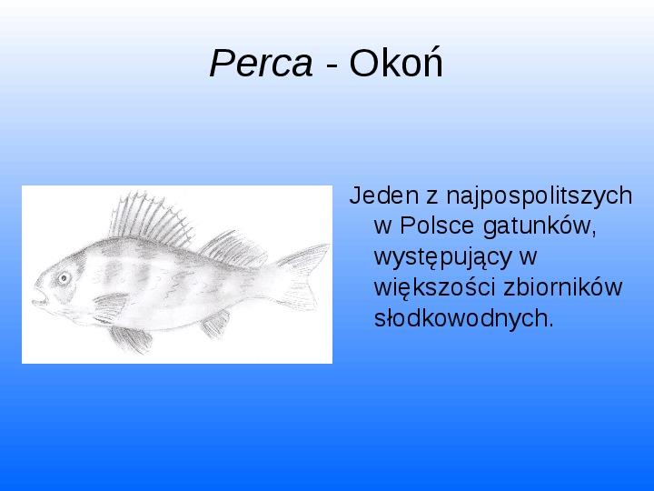 Nasze lokalne światy wodne Jeziorko Kamionkowskie - Slajd 32