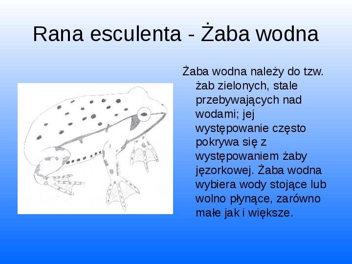 Nasze lokalne światy wodne Jeziorko Kamionkowskie - Slajd 35