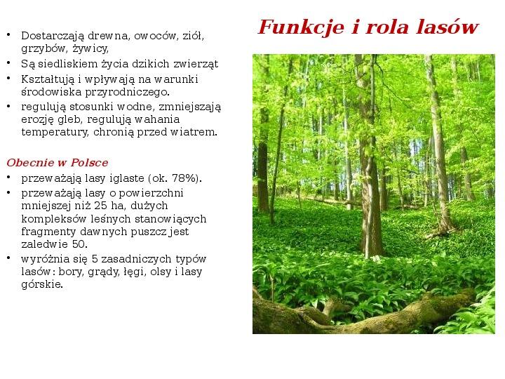Funkcje i rola lasów - Slajd 2