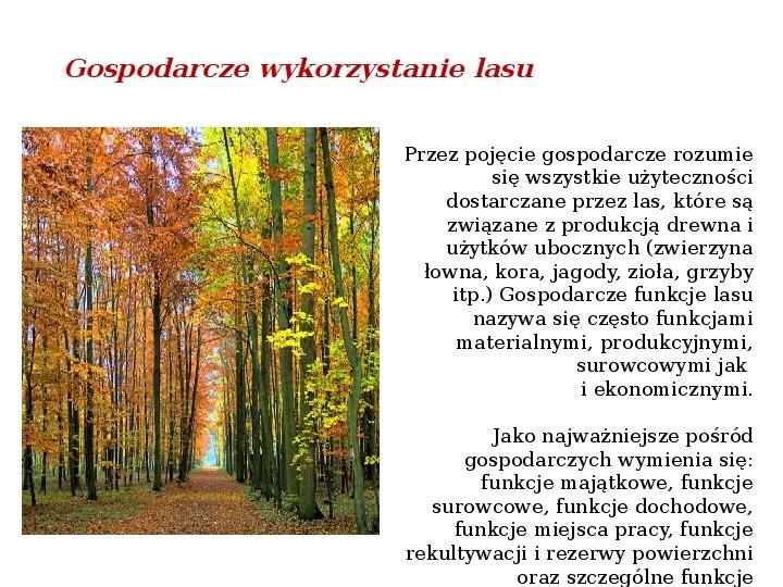 Funkcje i rola lasów - Slajd 3