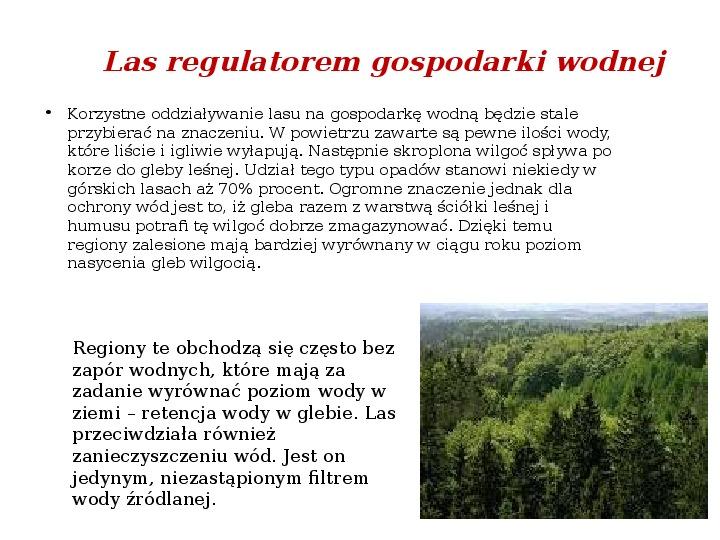 Funkcje i rola lasów - Slajd 4