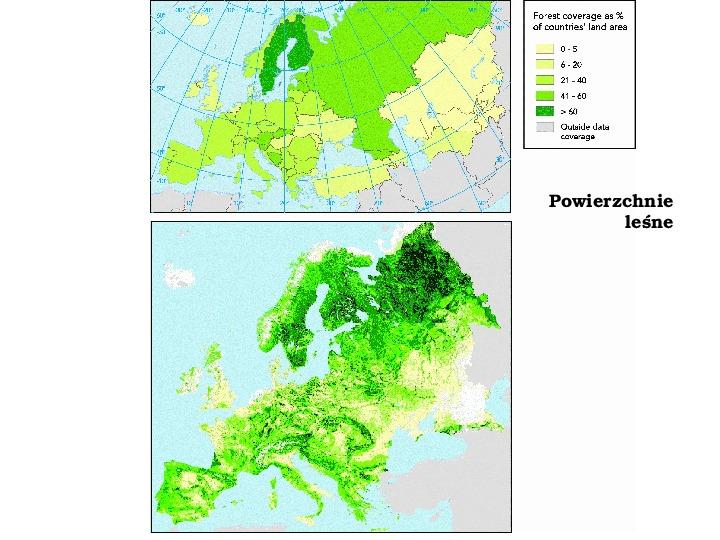 Funkcje i rola lasów - Slajd 5