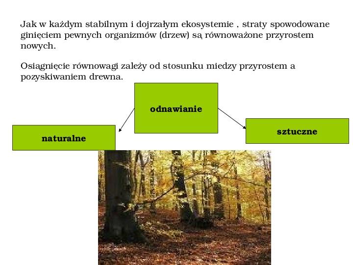 Funkcje i rola lasów - Slajd 7