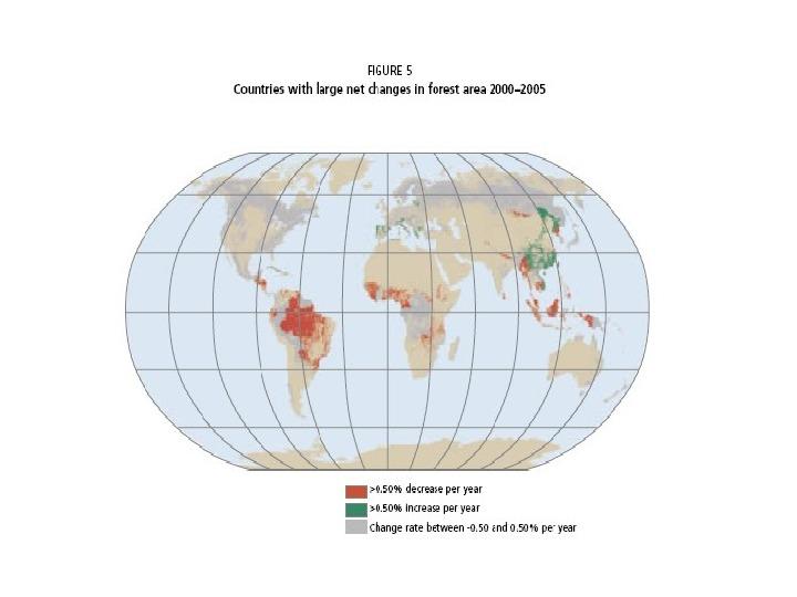 Funkcje i rola lasów - Slajd 12