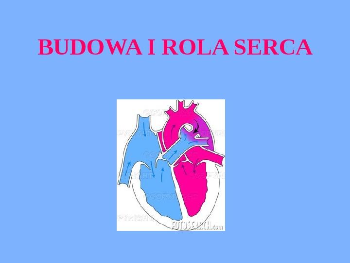 Budowa i rola serca - Slajd 1
