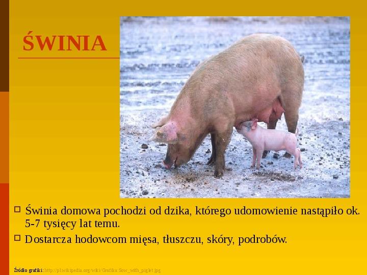 Co uprawiają i hodują ludzie w Polsce? - Slajd 4