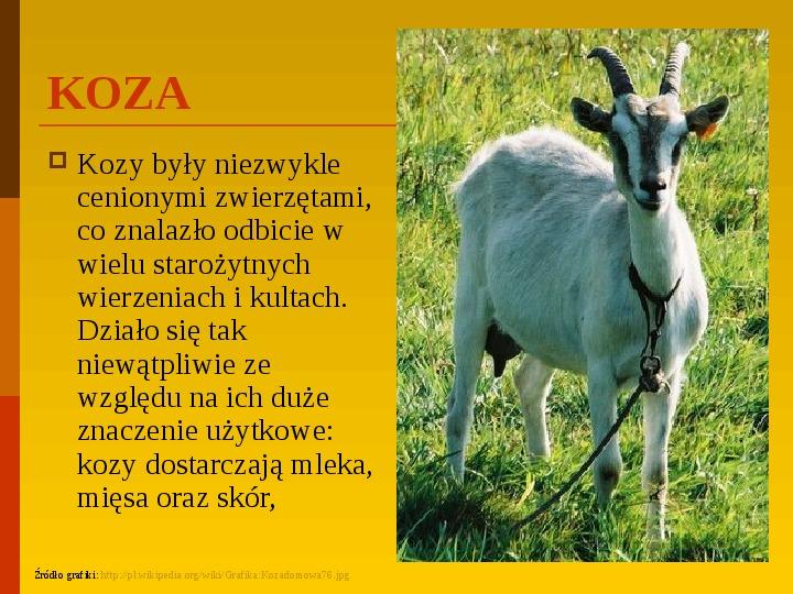 Co uprawiają i hodują ludzie w Polsce? - Slajd 6