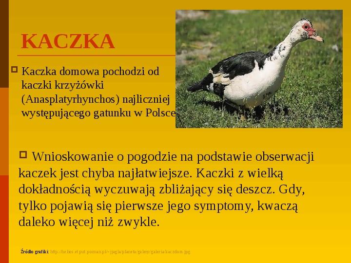 Co uprawiają i hodują ludzie w Polsce? - Slajd 8