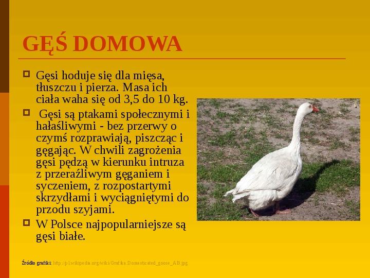 Co uprawiają i hodują ludzie w Polsce? - Slajd 11