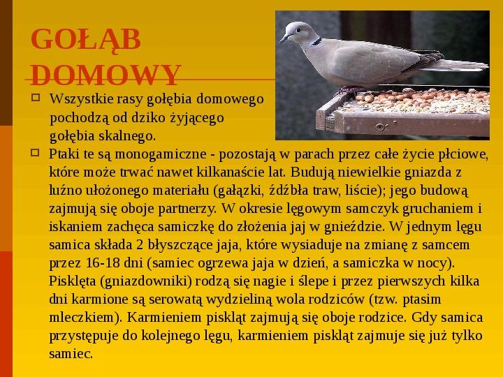 Co uprawiają i hodują ludzie w Polsce? - Slajd 12