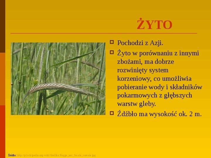 Co uprawiają i hodują ludzie w Polsce? - Slajd 17